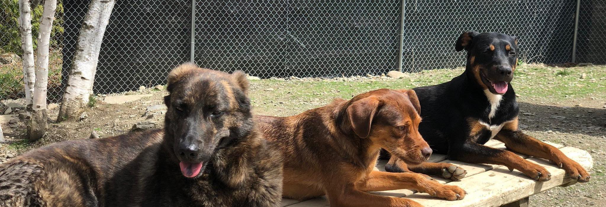 Grooming Bangor Pet Resort